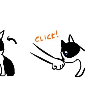 10 suggerimenti per migliorare il tuo clicker training
