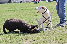 flexi_dogs_playing