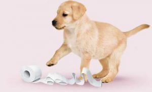 labrador-retriever-carta-igienica-300x182